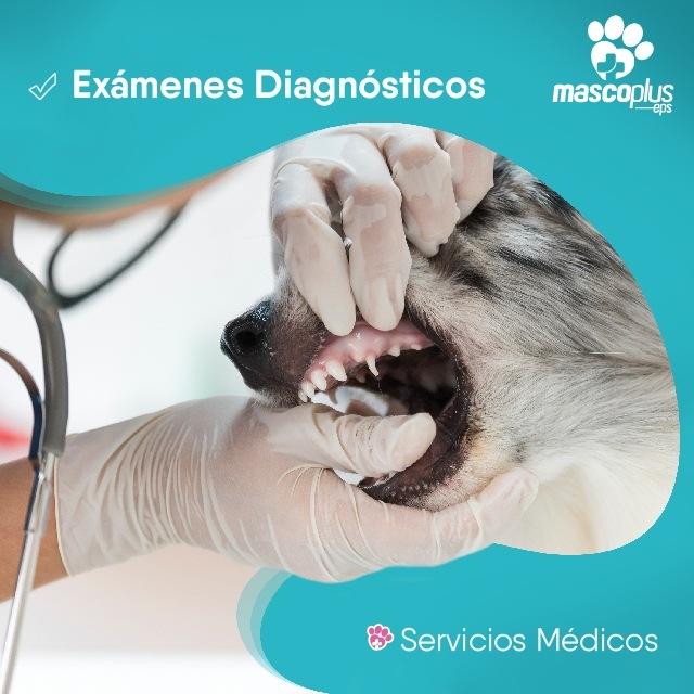Exámenes Diagnostico